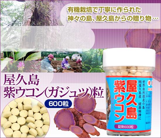 屋久島 紫ウコン (ガジュツ) 粒